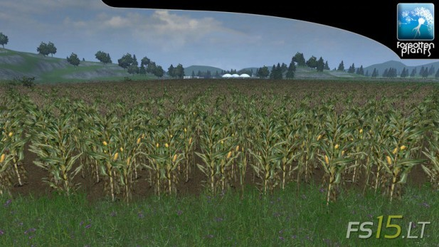 Forgotten-Plants-Maize-v-1.0-3