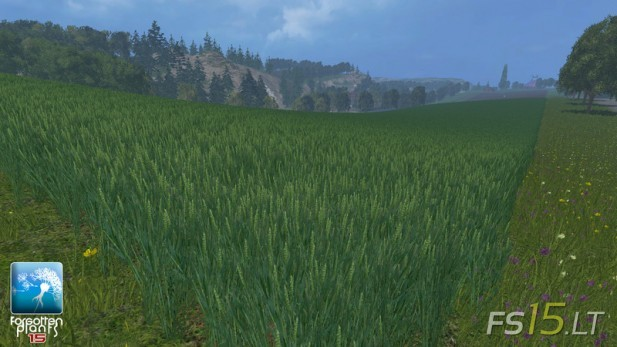 Forgotten-Plants-Wheat-and-Barley-v-2.0-2