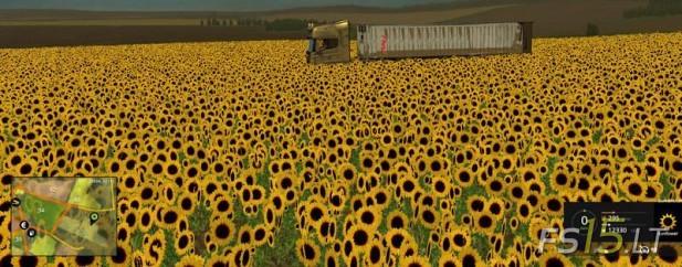 Sunflower-Textures