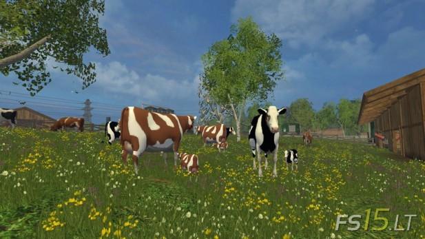 Cow-Family