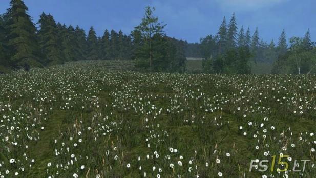 Grass-Texture