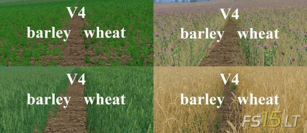 Wheat-Texture